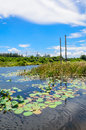 Lotus pond with the blue sky background and petrochemical plant Stock Photo