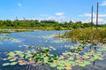 Lotus pond with the blue sky background and petrochemical plant Stock Photos