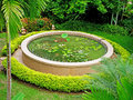 Lotus pond a round with various species Royalty Free Stock Images