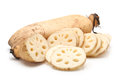 Lotus root Stock Photography
