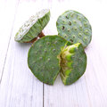 Lotus seeds green Royalty Free Stock Photo