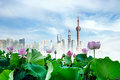 Lotus shanghai skyline and in full bloom against a blue sky Stock Images