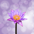 Lotus or water lily flower on bokeh background Royalty Free Stock Photo