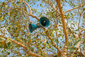 Loudspeaker creative on a tree closeup india Stock Image