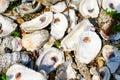 Louisiana Oyster Shells