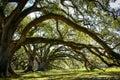 Louisiana plantation with a beautiful line of oaks Royalty Free Stock Photos