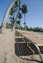 Lounge chairs under queen palm trees at anaeho omalu bay Stock Photos