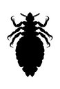 Louse, head louse, silhouette, Royalty Free Stock Photo