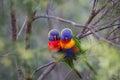 Ptactvo v měkký nastavení