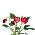 Love In Bloom 4