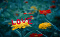 Love card above flower Royalty Free Stock Photo