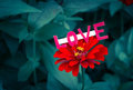 Love card above red flower Royalty Free Stock Photo