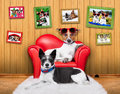 Royalty Free Stock Photography Love couple sofa dogs
