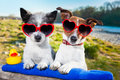 Love couple on vacation two dogs in enjoying the summer holidays Stock Photography