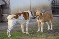 Love dogs romance between two stray in a shelter for vagrant animals Stock Photos