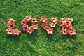 Love flowers on green grass Royalty Free Stock Photo