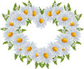 Love heart of daisies valentines day Royalty Free Stock Images