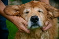 The love for his dog and loyal friend a pup gets a nice bath from master a head massage Royalty Free Stock Photos