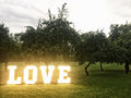 Love neon letters among trees Royalty Free Stock Photo