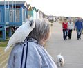 We love our pets photo of a parrot on shoulder on woman and family taking pet dog out for walk along seafront in whitstable photo Royalty Free Stock Image