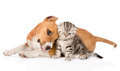 Love puppy and kitten. isolated on white background Royalty Free Stock Photo
