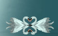 Love swans heart making a on misty water Royalty Free Stock Photo