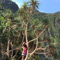 Love trees!!!! Royalty Free Stock Photo