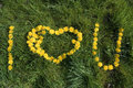 Love u background natural from dandelion writting Royalty Free Stock Photography