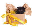 Lovely black kitten in a box set Royalty Free Stock Photo