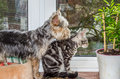 Lovely charming fluffy cat playing with a pretty good dog Royalty Free Stock Photo