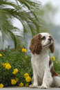 Lovely dog Stock Photography