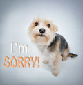 Lovely dog beg pardon i m sorry and look Stock Images