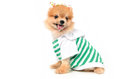Lovely dog dressing a shirt Royalty Free Stock Images