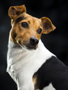 Lovely dog little over a dark background Royalty Free Stock Photo