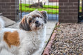 Lovely dog looking at camera Royalty Free Stock Photo