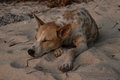 Lovely dogs the lying on warm sand, kind friends of a dog. Royalty Free Stock Photo