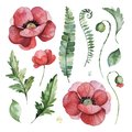 Lovely floral set with poppies flowers,branches,green,fern leaves,berries. Royalty Free Stock Photo