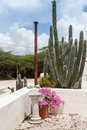 Lovely garden caribbean on the island of curacao Stock Photos