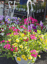 Lovely hanging planters with annuals for sale at a local farmer s market Royalty Free Stock Photos