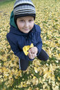 Lovely little boy collecting autumn leaves Royalty Free Stock Image