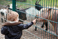 Lovely little toddler boy feeding animals in zoo Royalty Free Stock Photography