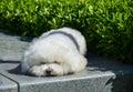 A Lovely Little White Dog