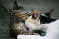 Lovely moment the that kitten and his mother be absent mined as we can see the expresstion via them face Stock Photo