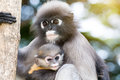 Lovely monkeys,cute Macaque glasses,funny monkey lives in a natu Royalty Free Stock Photo