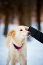 Lovely purebreed dog training funny with man Stock Image