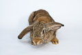 Lovely rabbit on a white background Stock Photography