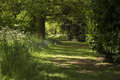 Lovely shallow depth of field fresh landscape of English forest