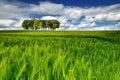Lovely sunday spring in rye field co cork ireland Royalty Free Stock Photos