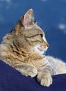 Lovely tabby cat is relaxing on the sun Royalty Free Stock Image