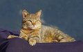 Lovely tabby cat is relaxing on the sun Stock Photo